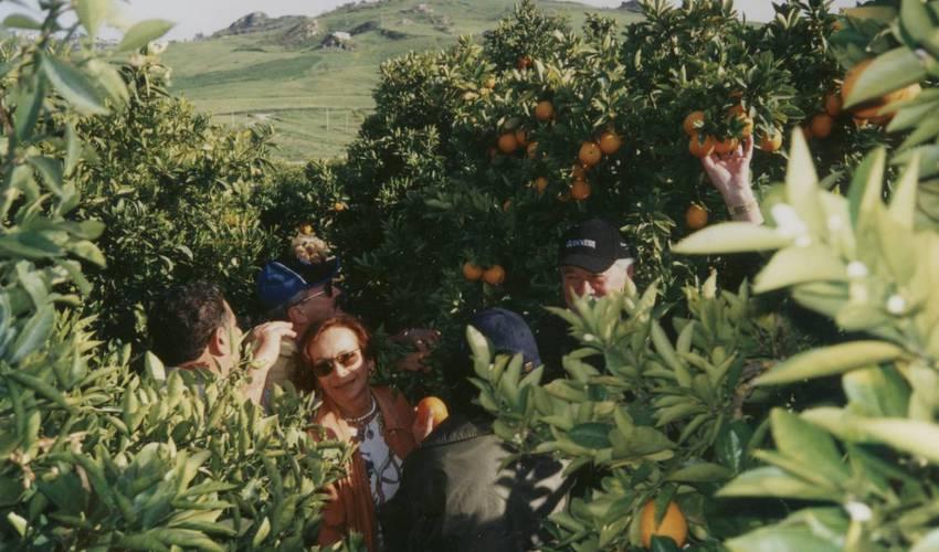 Orangen und Zitrusfrüchte gehören zu den Produkten der stark von der Landwirtschaft geprägten Gemeinde. Foto: Partnerschaftsverein